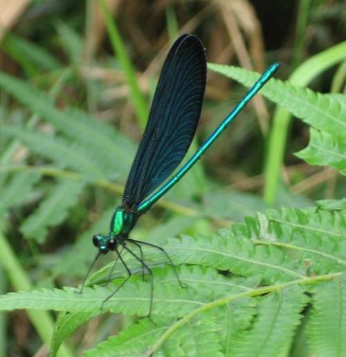 768394-Dazzling-dragonfly--Taroko-Gorge-2