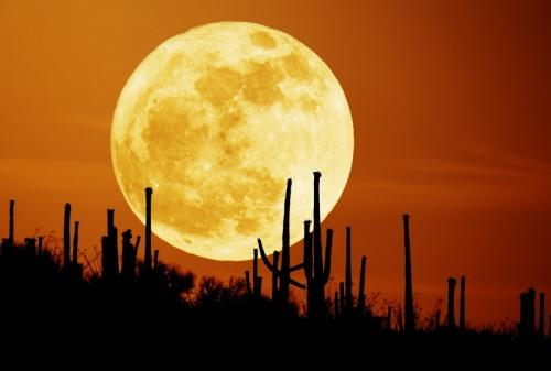 saguaroMoon_seip800